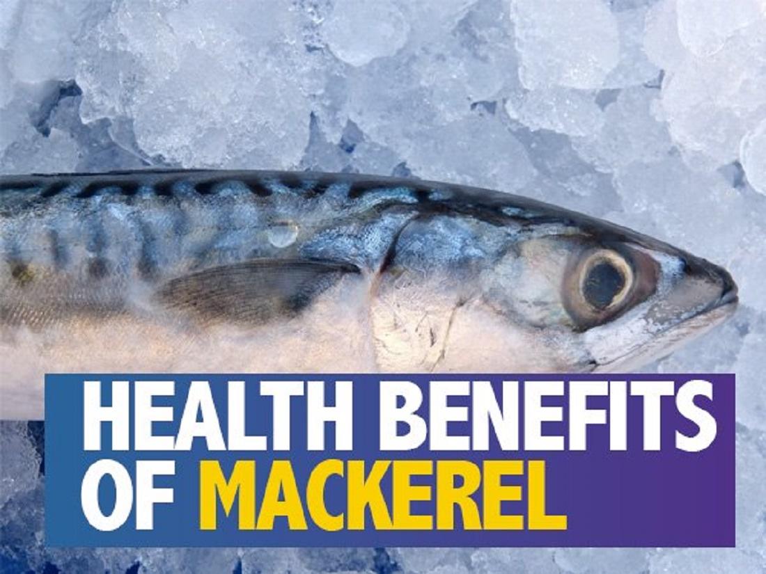 فوائد أسماك الماكريل