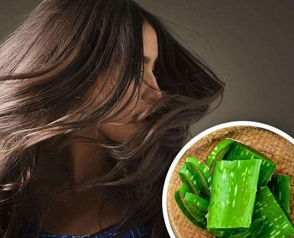 الصبار لعلاج تلف الشعر