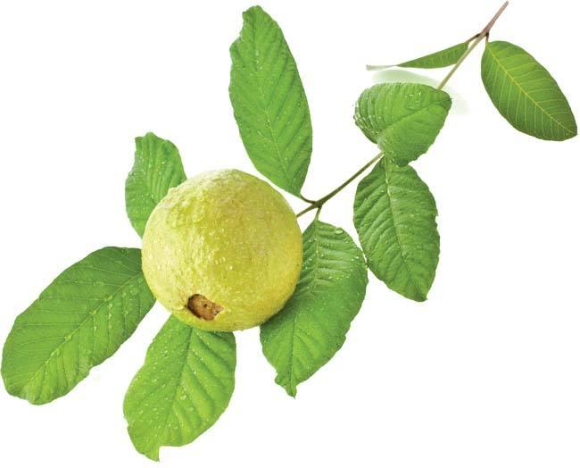 مشروب الجوافة والبابونج للتخلص من الكرش