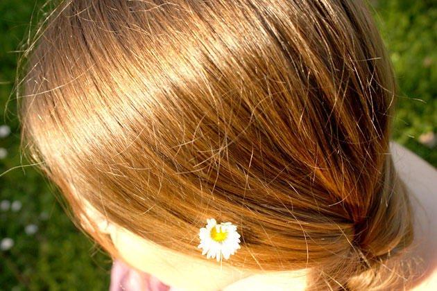 ماسكات من البابونج لعلاج مشاكل الشعر